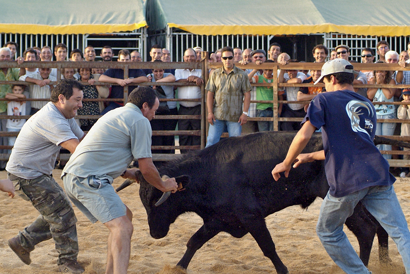 Bullfight Vila d. Bispo